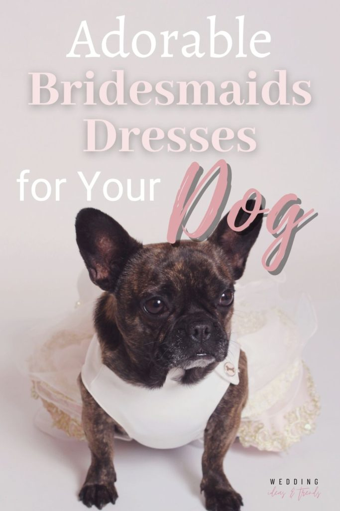 Most Adorable Bridesmaids Dresses for Your Dog